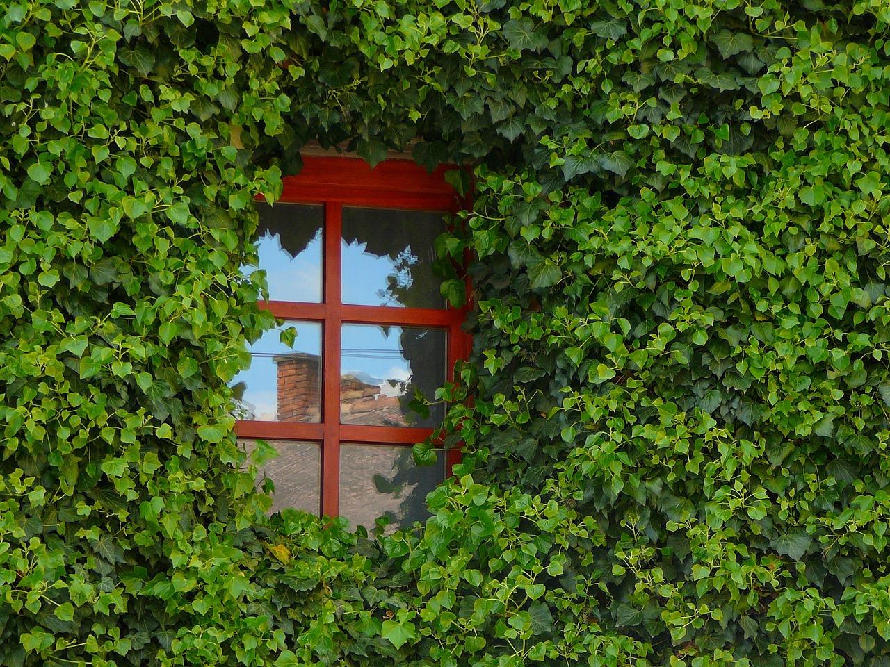Dépose de fenêtre, faire appel à un expert